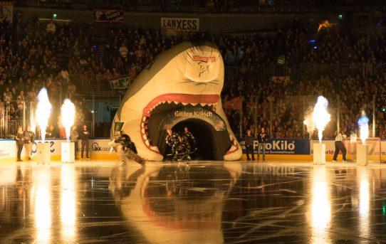 Sportfotografie bei den Kölner Haien